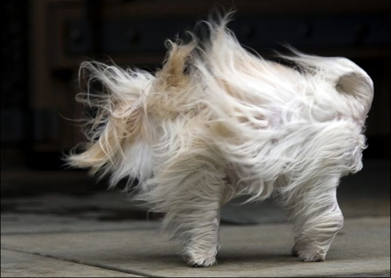 A bit windy don\'t ya\' think??