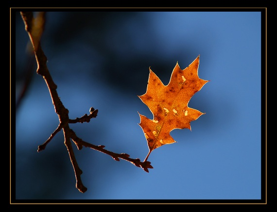 "I love the ""lone"" leaf or flower pictures"