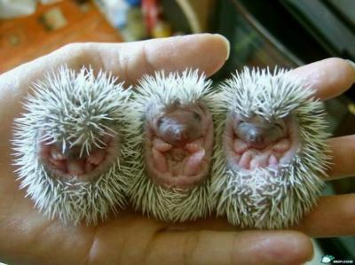 don\'t you want to take them home?