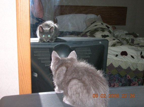 Marvin loves to play with his buddy in the mirror