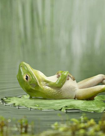 This is my kinda frog!