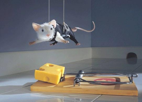 mouse-mi2-542x390