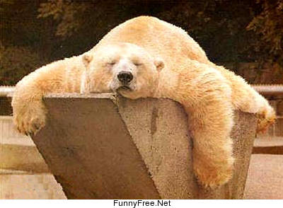 polar-bear-funny_pictures_i_can_bearly_move