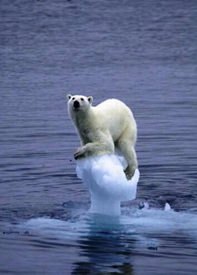 polar-bear77
