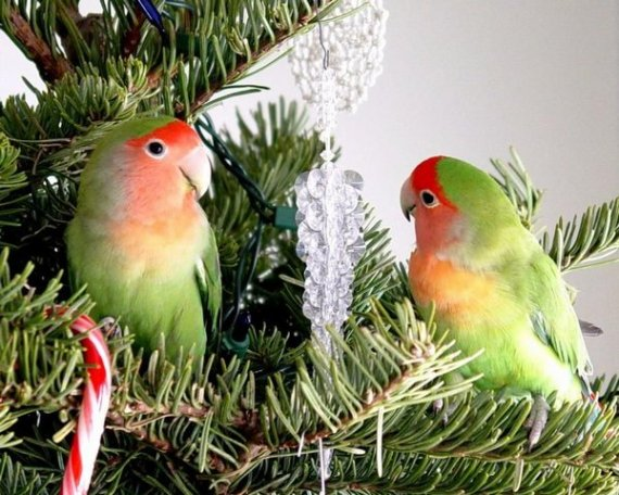 Birds are better than having your cat up the tree