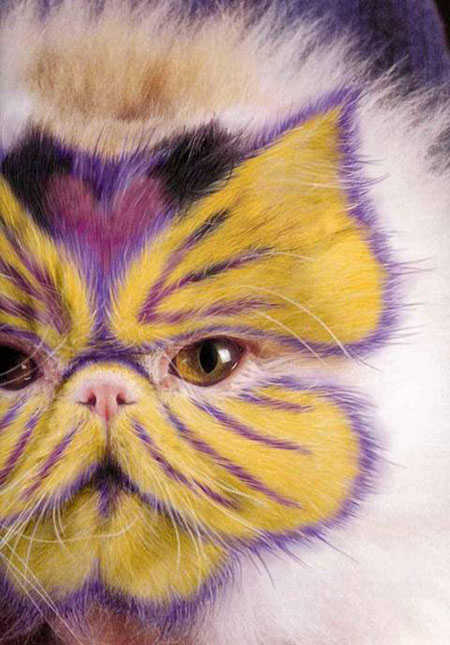 this is wrong on so many levels - don't paint your pet!