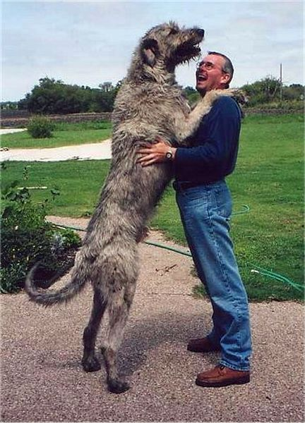 That's a big dang dog! How much could he eat??