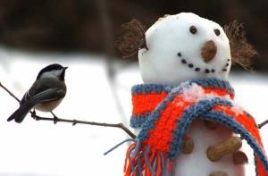 bird-n-snowman-600x395