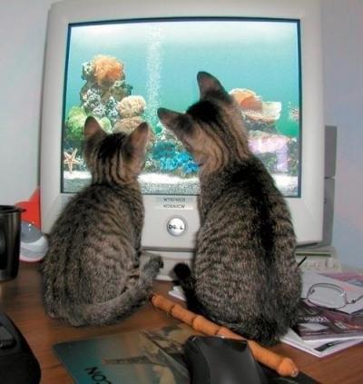 cats-n-computr