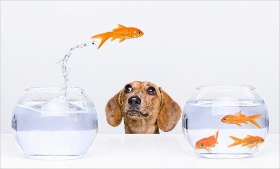 dog-n-fish1