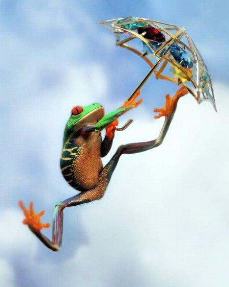 frog-n-umbrella