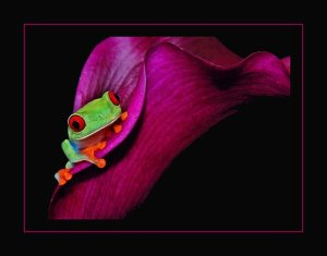 frog-pink