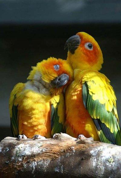 birdie-love