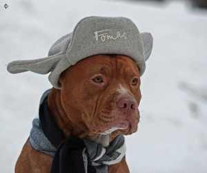 dog-n-hat