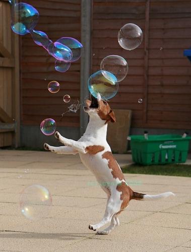 doggie-bubbles