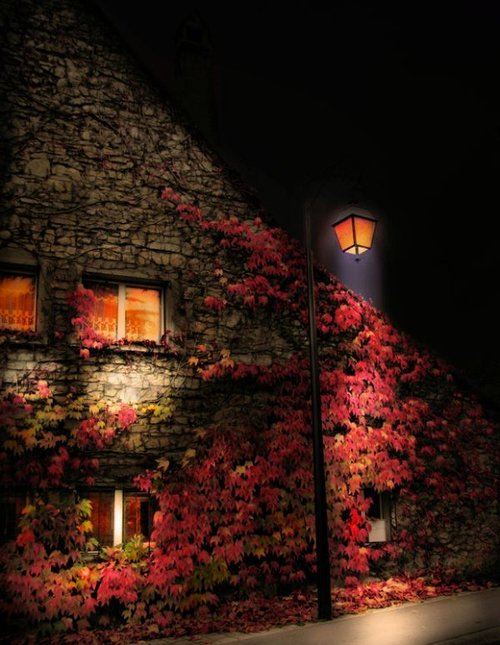 leafy-house-at-night