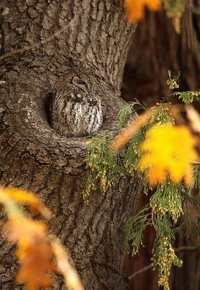 owl-400_1225983759eg7dvtj