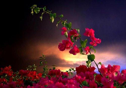 Return to Serenity by Saqib Z.