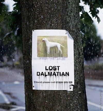 sign-lost-dog