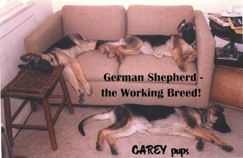 sleeping-working-dogs
