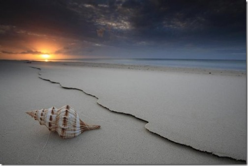 shell by Gary