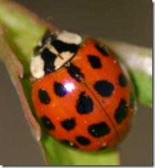 ladybug durham 50305